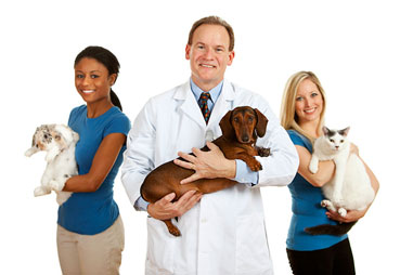 Find a Veterinarian Near Me